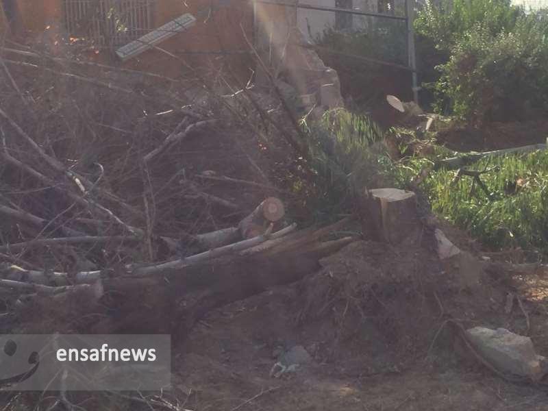 عکسها | قطع درختان در فرودگاه مهرآباد