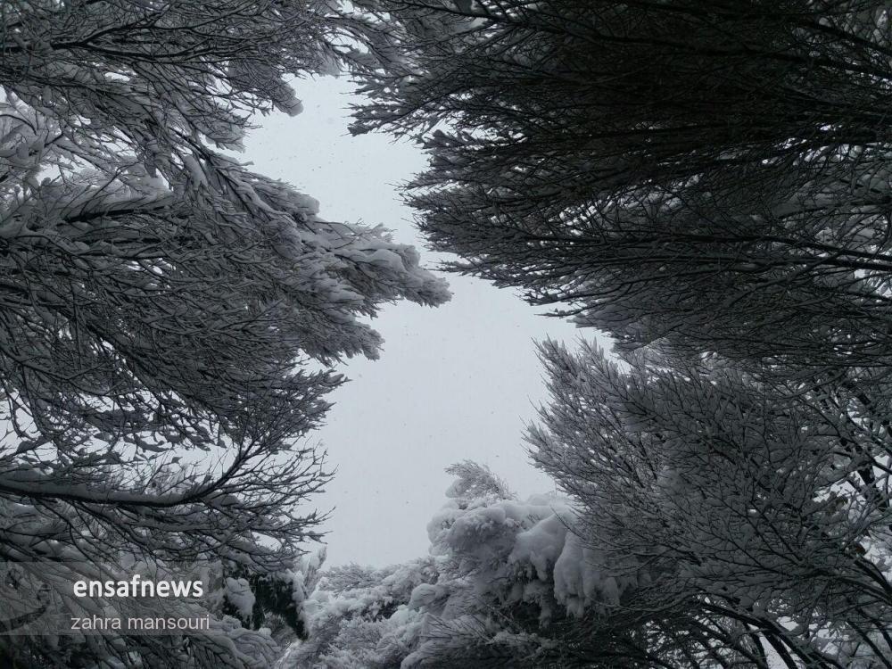 photo_2018-01-28_16-51-58