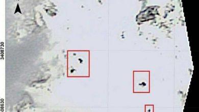 سرنوشت 4 مسافر زخمی هواپیمای آسمان