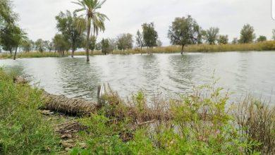 زرآباد بعد از سیل سرسبز شده است