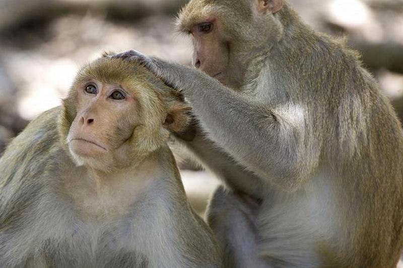 «حیوانات در شیوع بیماری فاصله اجتماعی را رعایت میکنند»