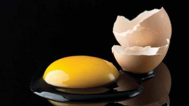 تخم مرغ - گرانی تخم مرغ - قیمت تخم مرغ