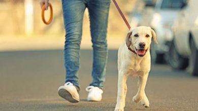 از سگگیری تا قبض برق | امیر هاشمی مقدم